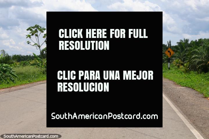 A palmeira alinhou o norte de caminho de Pongo de Caynarachi a Yurimaguas. (720x480px). Peru, América do Sul.