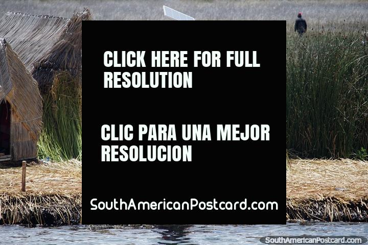 As pessoas Uros vivem de ilhas de cana flutuam em Lago Titicaca, uma mulher do lado de fora de casas cobertas com palha, Puno. (720x480px). Peru, América do Sul.