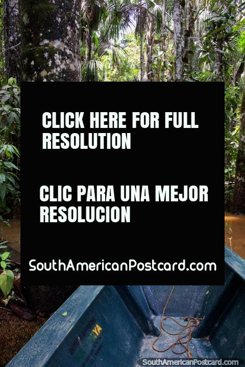 Remar calmamente ao longo de uma via marïtima sombreada fora a Lago de Sandoval em Reserva Nacional Tambopata em Porto Maldonado. (480x720px). Peru, América do Sul.