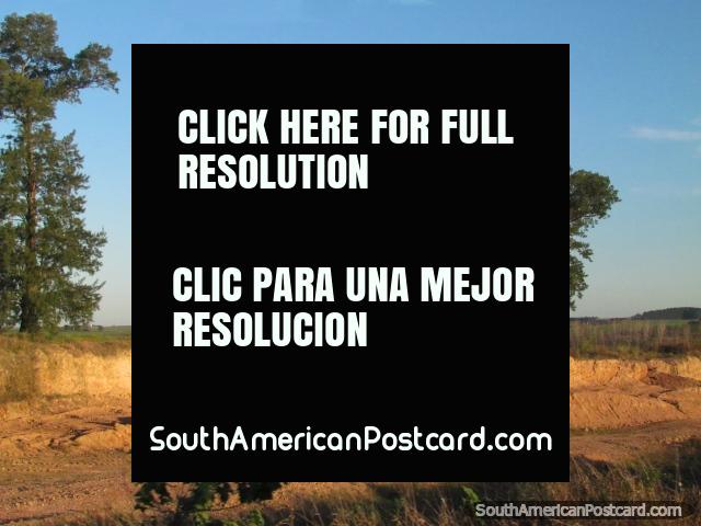 Árboles y campo en el camino al sur hacia Palmira. (640x480px). Uruguay, Sudamerica.