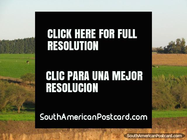 Terrenos y colores del campo entre Dolores y Palmira. (640x480px). Uruguay, Sudamerica.