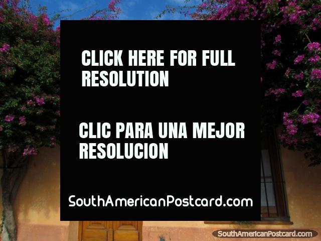 Casa histórica y flores moradas en Colonia del Sacramento. (640x480px). Uruguay, Sudamerica.