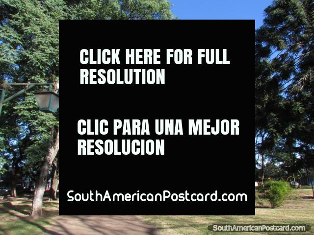 Plaza Cristobal Colon, shady old trees, Tacuarembo. (640x480px). Uruguay, South America.