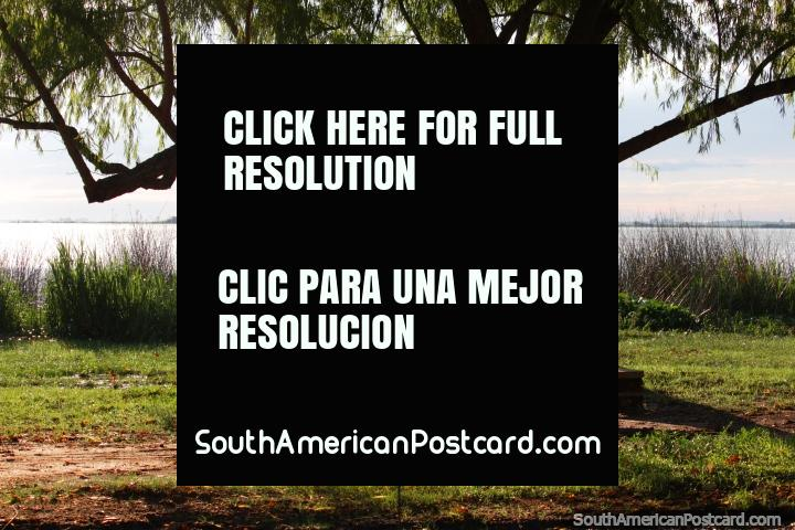 Tome un asiento bajo un árbol a orillas del río en Fray Bentos. (720x480px). Uruguay, Sudamerica.