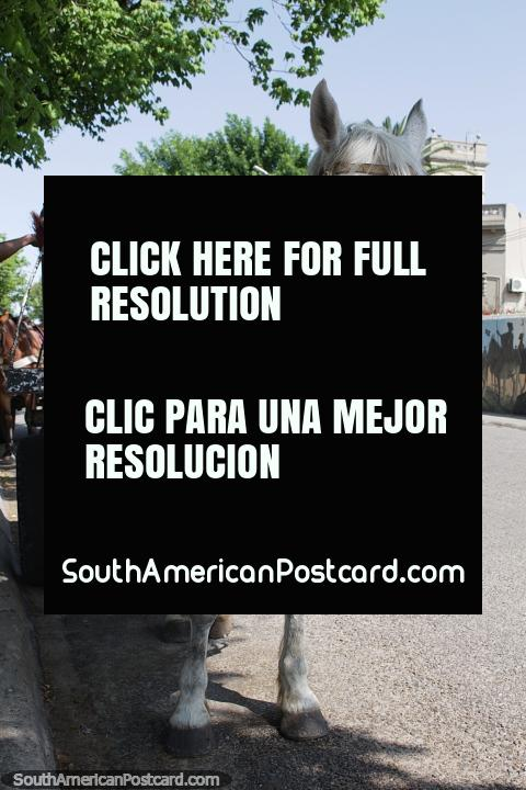 Caballo blanco con carro descansa a la sombra al lado de la Plaza Artigas en Carmelo. (480x720px). Uruguay, Sudamerica.