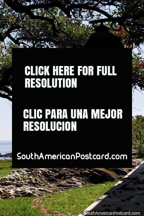 Lanterna amarela, rochas e árvores, olhando para fora ao rio em Colônia. (480x720px). Uruguai, América do Sul.