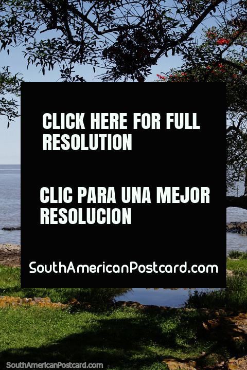Ã�rvore com flores vermelhas, em volta das rochas e rio perto de Bastião de San Miguel em Colônia. (480x720px). Uruguai, América do Sul.