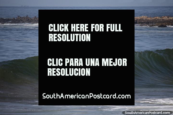Surfer captura una buena ola en la playa Brava, el lado áspero del punto en Punta del Este. (720x480px). Uruguay, Sudamerica.