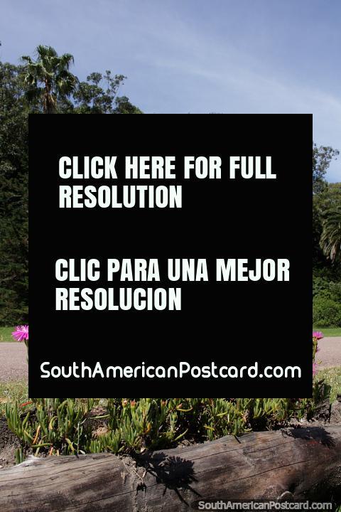 Santa Teresa National Park with beautiful flowers and trees near the entrance, Punta del Diablo. (480x720px). Uruguay, South America.