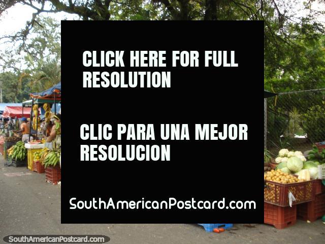 The fruit stalls beside San Cristobal bus terminal. (640x480px). Venezuela, South America.