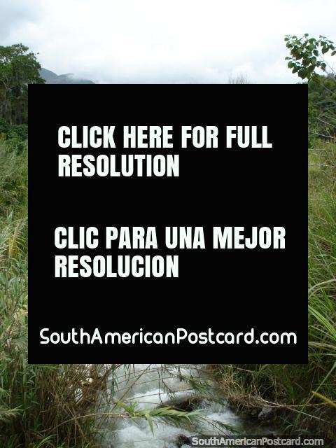 The river that runs through Merida city. (480x640px). Venezuela, South America.