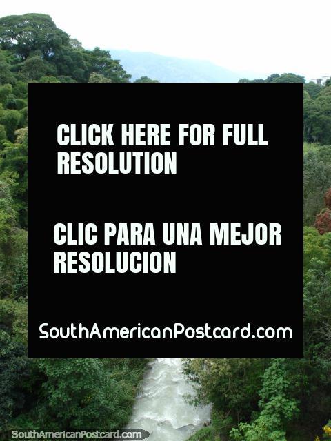 The river and bush running under the bridge in Merida. (480x640px). Venezuela, South America.