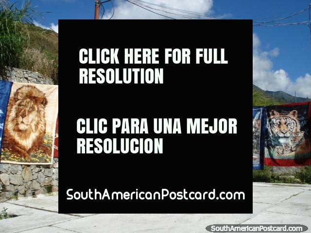 Images of lions and tigers on warm blankets sold in the highlands near Merida. (640x480px). Venezuela, South America.