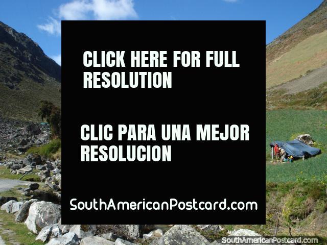 Locals working in the crop fields around the Collado del Condor area, Merida. (640x480px). Venezuela, South America.