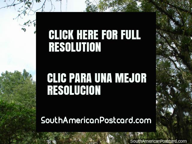 The trapeze through the trees at Merida botanical gardens. (640x480px). Venezuela, South America.