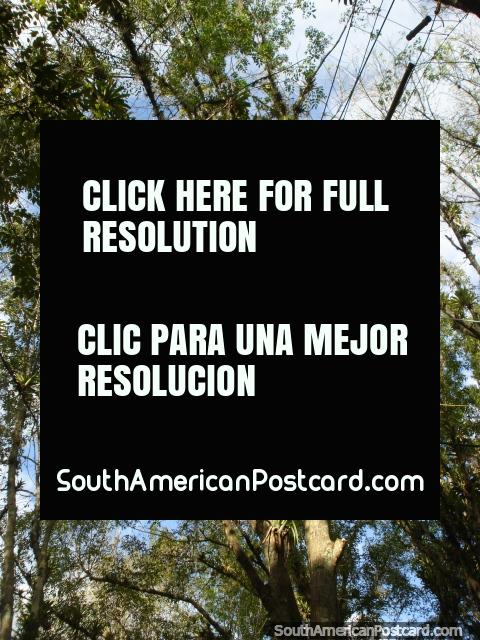 High in the trees on a platform at Jardin Botanico de Merida. (480x640px). Venezuela, South America.