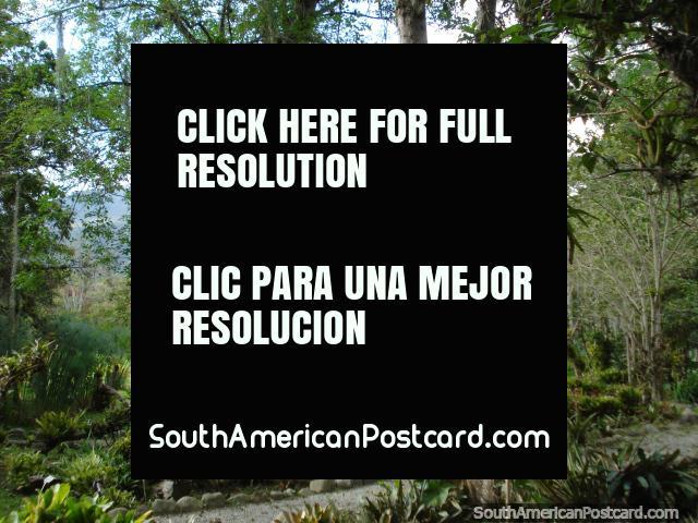 Pathways and trees at Jardin Botanico de Merida. (640x480px). Venezuela, South America.