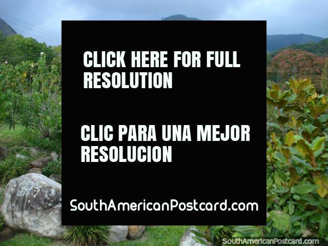 The rock garden, fauna and hills at the Merida botanical gardens. (640x480px). Venezuela, South America.
