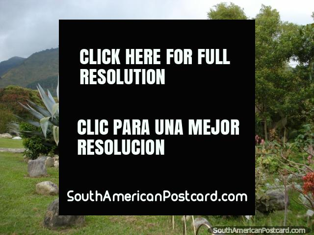 Cactus, rocas, plantas, árboles y colinas en jardines botánicos Mérida. (640x480px). Venezuela, Sudamerica.