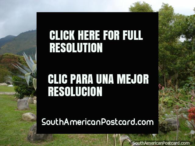 Cactus, rocks, plants, trees and hills at botanical gardens Merida. (640x480px). Venezuela, South America.