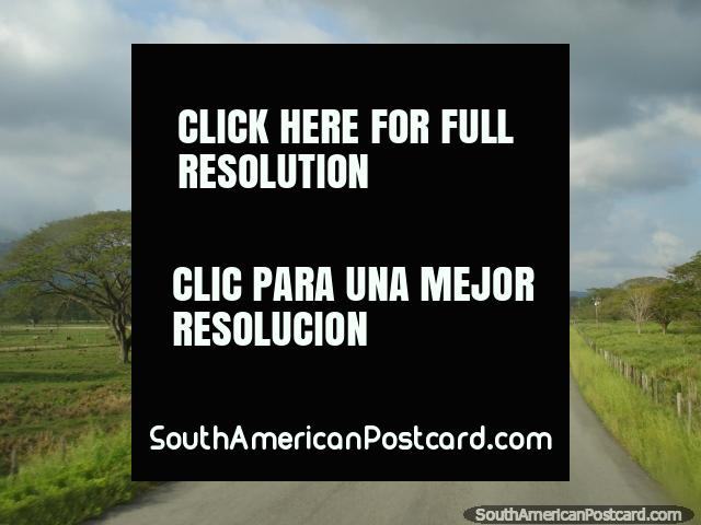 Beautiful country road heading northward to Maracaibo, trees and fields. (640x480px). Venezuela, South America.