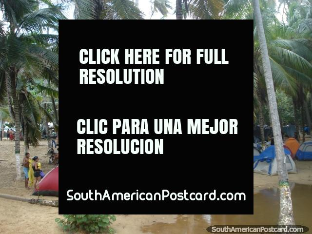 The camping area behind the beach Playa Grande at Puerto Colombia. (640x480px). Venezuela, South America.