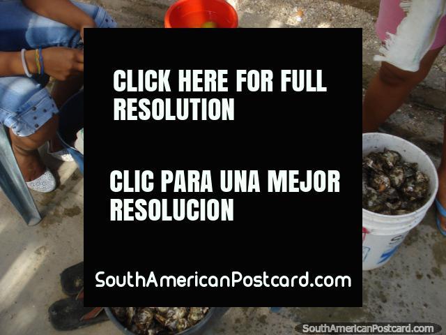 Fresh oysters with lemon by the bucket-load at La Restinga on Isla Margarita. (640x480px). Venezuela, South America.