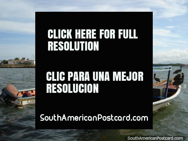 Fishing boats and pelicans at Boca de Rio on Isla Margarita. (640x480px). Venezuela, South America.