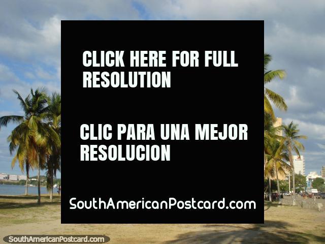 Las palmeras están de pie desde el principio de la playa en Puerto la Cruz. (640x480px). Venezuela, Sudamerica.
