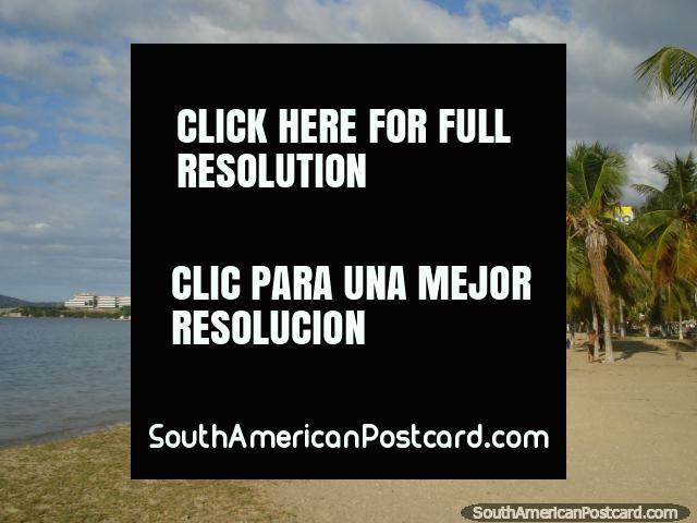 Puerto La Cruz beach with it's many palm trees, a boat marina at the eastern end. (640x480px). Venezuela, South America.