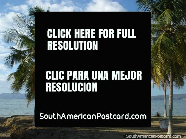 Beach and waterfront with palms at Puerto la Cruz, island views. (640x480px). Venezuela, South America.