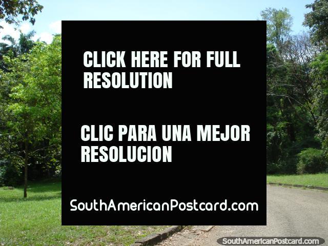 Andando os caminhos pelas árvores e verdura em Parque Cachamay em Cidade Guayana. (640x480px). Venezuela, América do Sul.