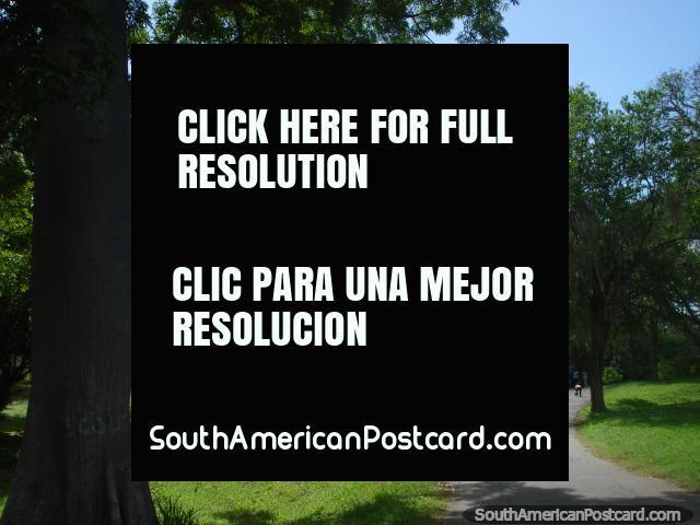 Andar por Parque Cachamay em Cidade Guayana ao longo dos caminhos para o jardim zoológico. (640x480px). Venezuela, América do Sul.