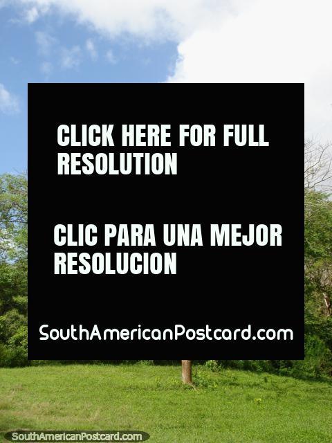 Árboles por el mil en Parque Cachamay en Ciudad Guayana. (480x640px). Venezuela, Sudamerica.