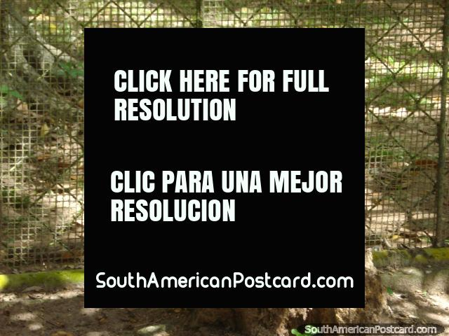 Tucan with its long beak at Loefling Park in Ciudad Guayana. (640x480px). Venezuela, South America.