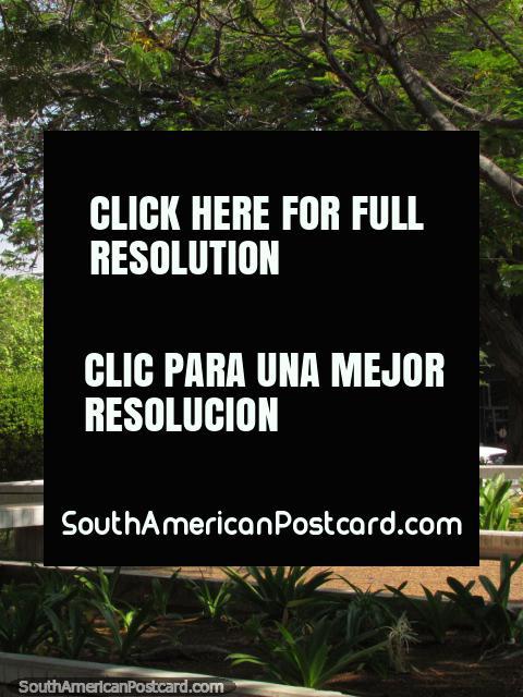 Parque agradable en Maracaibo, Plaza Bolivar. (480x640px). Venezuela, Sudamerica.