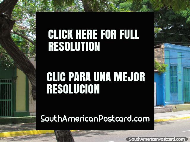 Uma linha de velhas casas abaixo de árvores em rua 93 em Maracaibo. (640x480px). Venezuela, América do Sul.