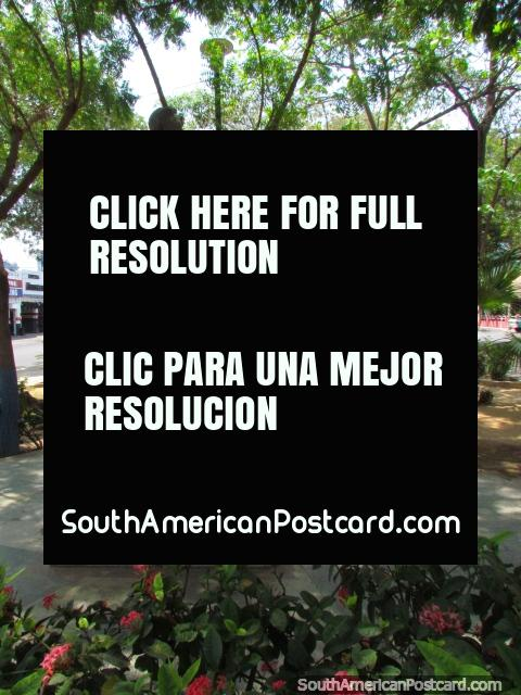 Plaza Dr. Adolfo d'Empaire in Maracaibo, nice and shady. (480x640px). Venezuela, South America.