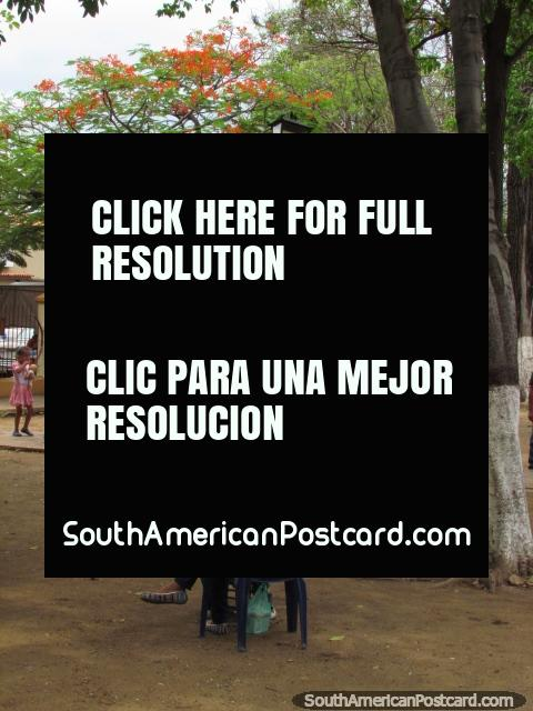 Plaza Chio, people relaxing under trees, Carora. (480x640px). Venezuela, South America.