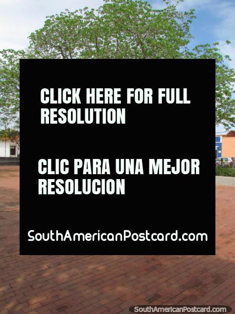 Plaza Miranda, huge tree and open space, Ciudad Bolivar. (480x640px). Venezuela, South America.