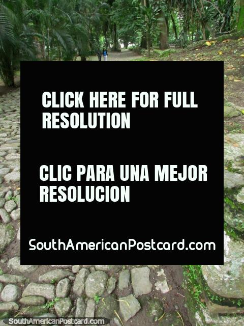 Walking the cobblestone paths of the old city of San Felipe. (480x640px). Venezuela, South America.