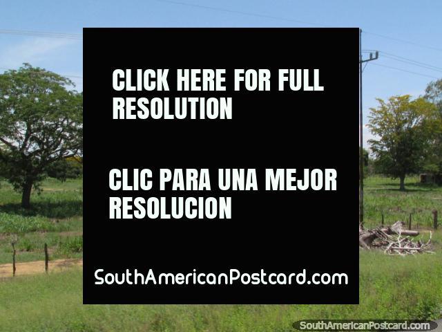 Campo llano y verde en camino a Coro de Maracaibo. (640x480px). Venezuela, Sudamerica.