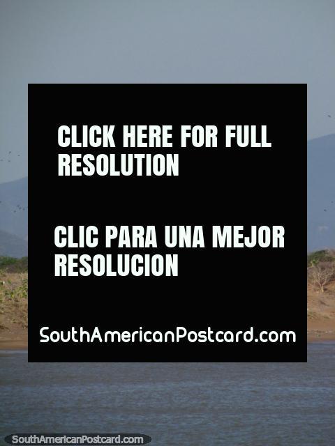 Os pássaros voam para além de uma enorme imagem de quadro de avisos e cartazes do presidente Chavez na praia de La Vela de Coro em Coro. (480x640px). Venezuela, América do Sul.