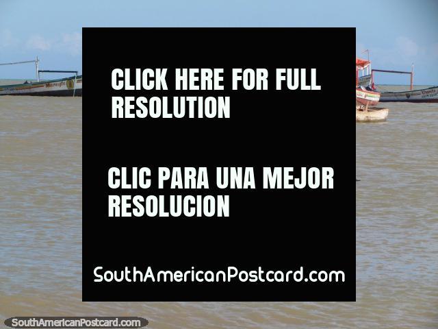 A group of 5 black seabirds paddle in the waters at La Vela de Coro. (640x480px). Venezuela, South America.