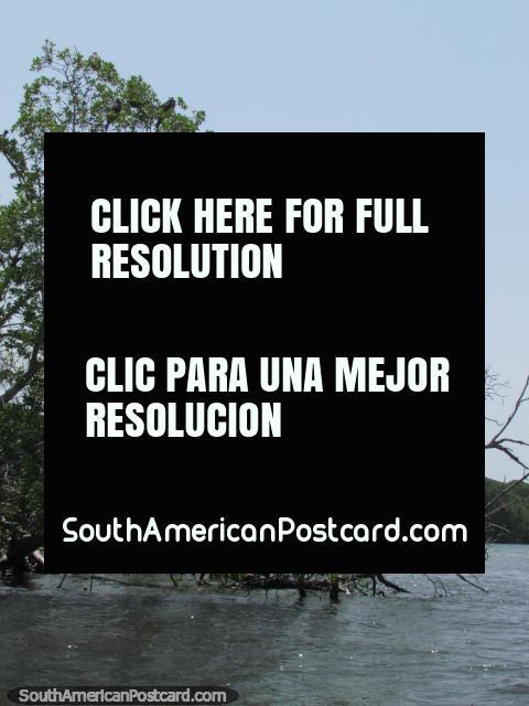 The island of birds (Isla Los Pajaros) at Morrocoy National Park. (480x640px). Venezuela, South America.