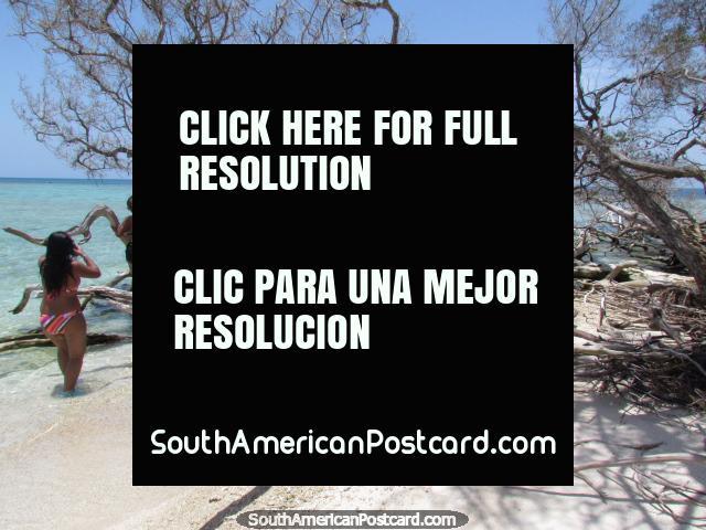 Los árboles secos y la madera flotante hacen modelos bonitos en el Cajo Sombrero, Parque Nacional de Morrocoy. (640x480px). Venezuela, Sudamerica.