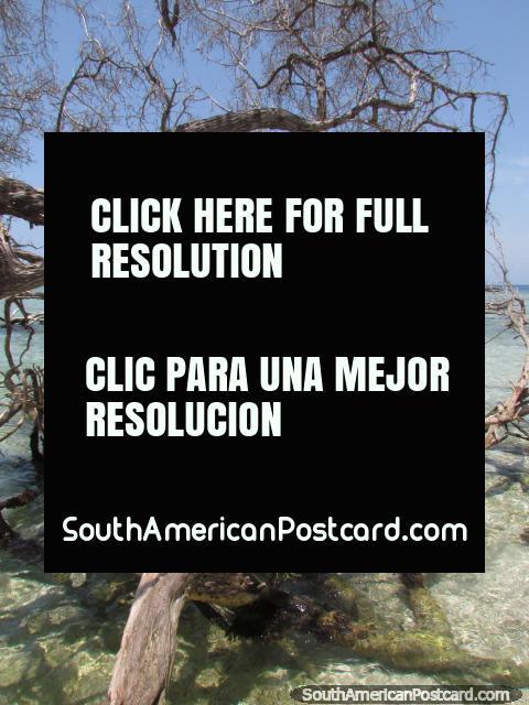 Exploring the shores of  island Cajo Sombrero at Morrocoy National Park. (480x640px). Venezuela, South America.