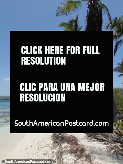 As palmeiras e as areias brancas são todos em volta do Cajo Sombreiro, Parque Nacional Morrocoy. (480x640px). Venezuela, América do Sul.