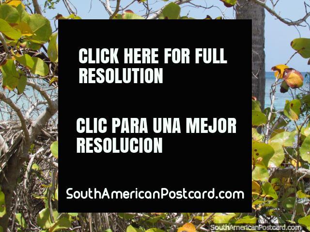 A tiny secluded island off of Cajo Sombrero, Morrocoy National Park. (640x480px). Venezuela, South America.