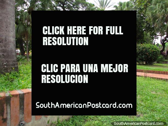La iguana grande se sienta en medio de Plaza Bolivar en Barinas. (640x480px). Venezuela, Sudamerica.